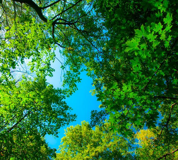Travaux forestiers en sologne
